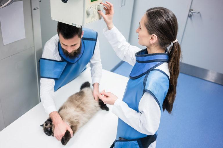 Røntgenbilde av katt