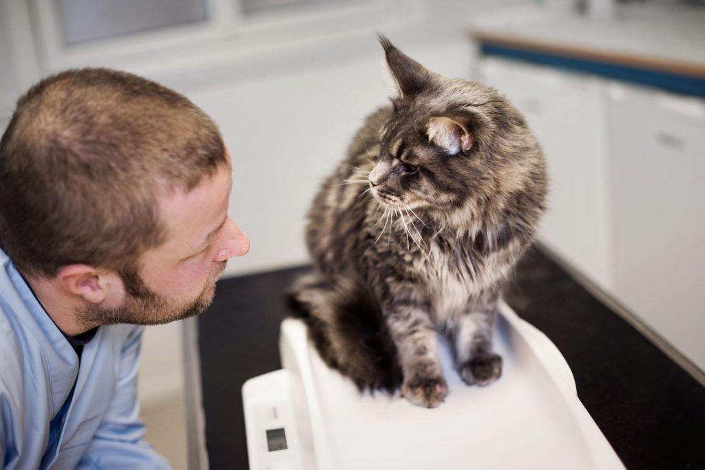 Helsesjekk av katt hos veterinær