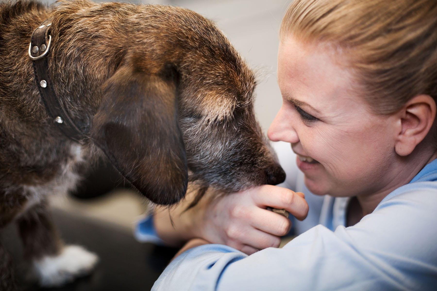 Helseskontroll av hund hos Lillehammer Dyreklinikk