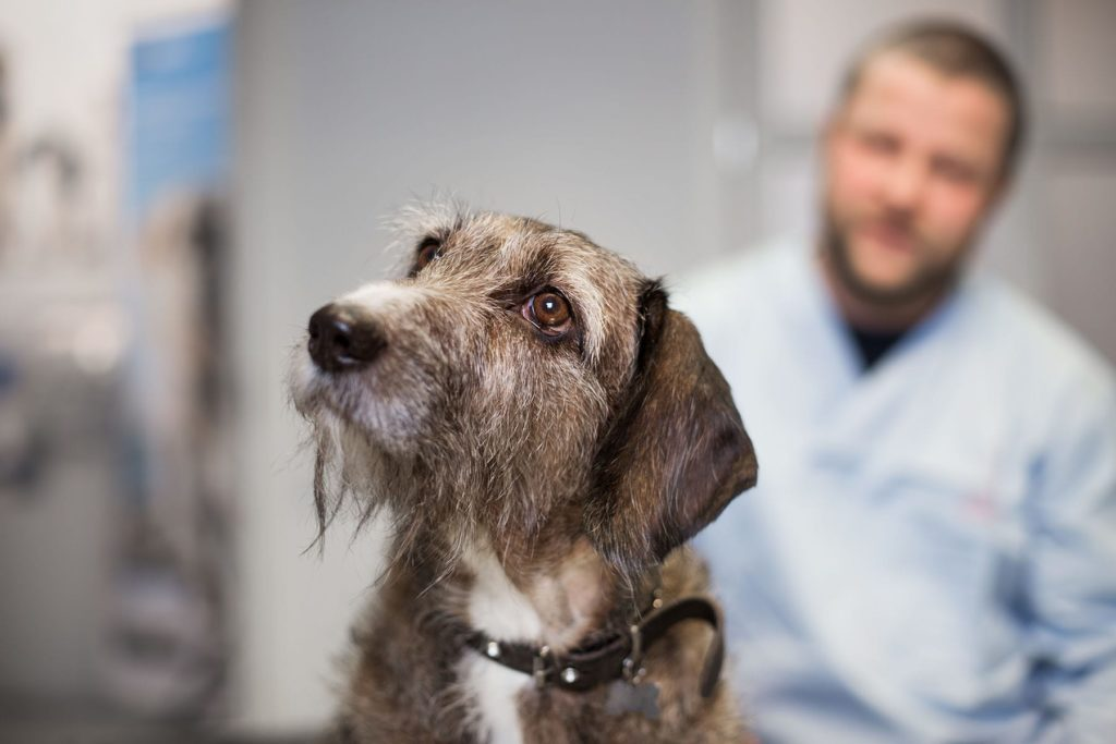 Hund hos Lillehammer Dyreklinikk