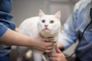 Helsesjekk av katt hos Lillehammer Dyreklinikk
