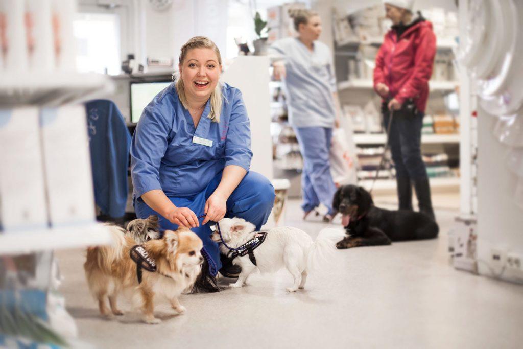Veterinær ved Lillehammer Dyreklinikk
