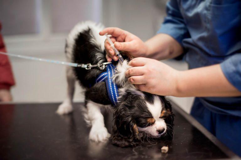 Vaksinering av hund
