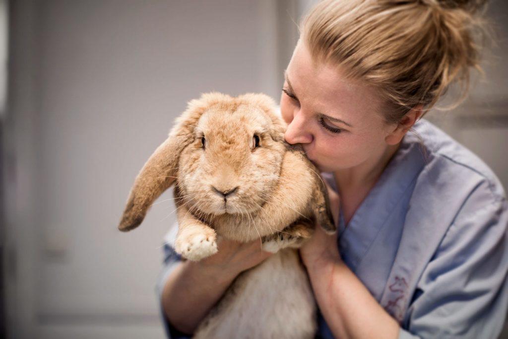 Behandling av kanin