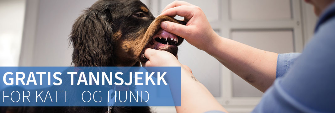 tannsjekk av hund i lillhammer