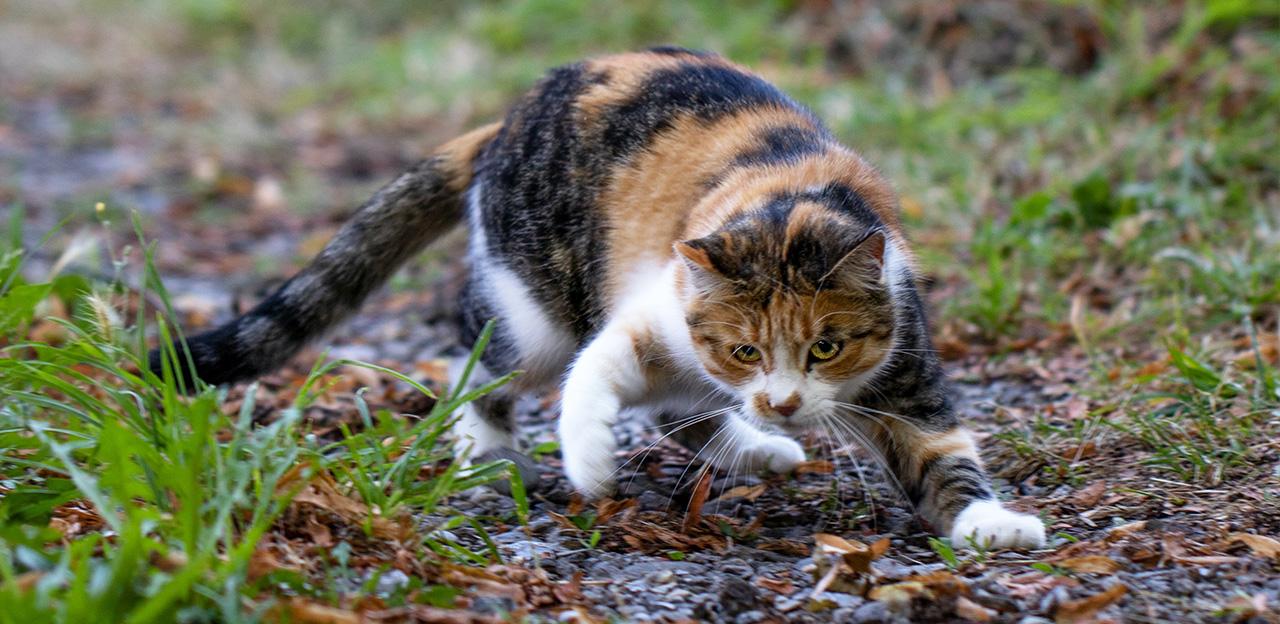 Katt på jakt etter fugl