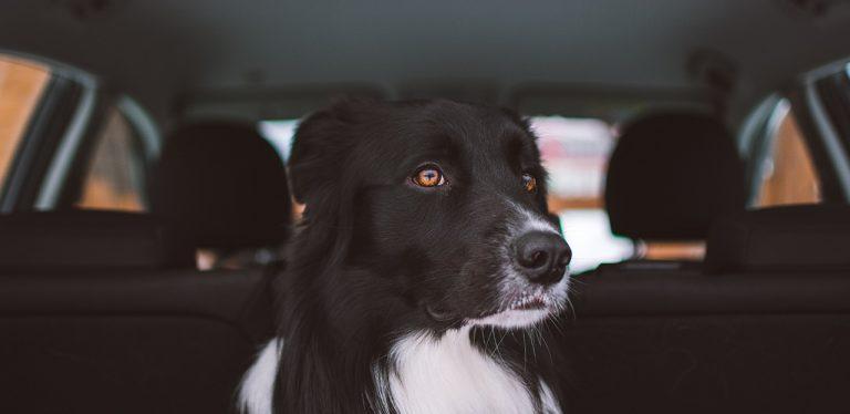 hund i bil, heteslag