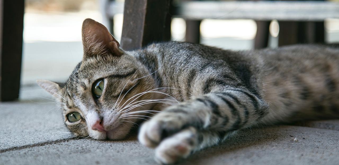 hjemløs katt