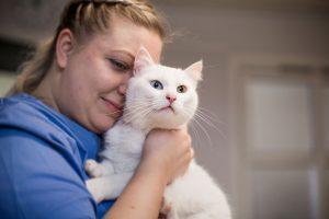katt til behandling hos lillehammer dyreklinikk