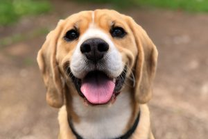 glad hund, sunn tannhelse